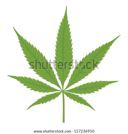 Vector cannabis leaf on white background. Marijuana. - stock vector