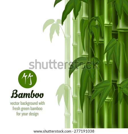 Vector card with bamboo on white background. - stock vector