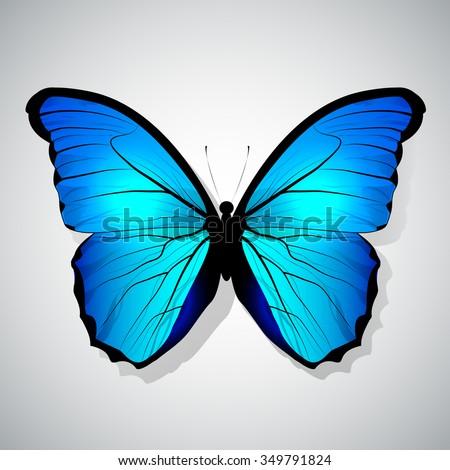 Vector Cartoon Blue Butterfly isolated - stock vector