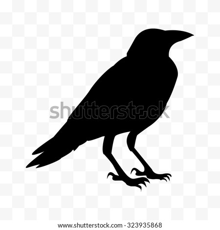 vector Cawing raven, Silhouette of the crow standing. - stock vector