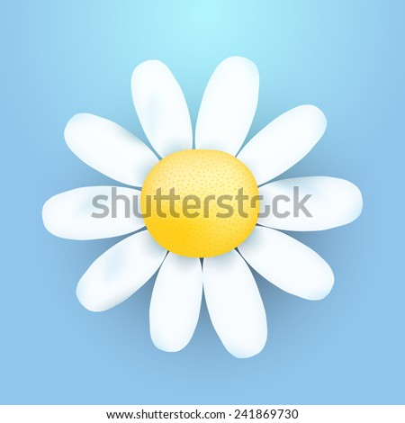 vector chamomile flower - stock vector