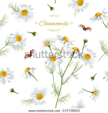 Chamomile Stock Images Royalty Free Images Vectors Shutterstock