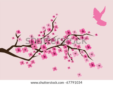 vector cherry blossom and a pink dove