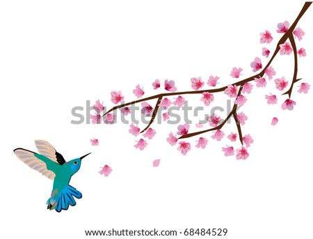 vector cherry blossom with humming bird - stock vector