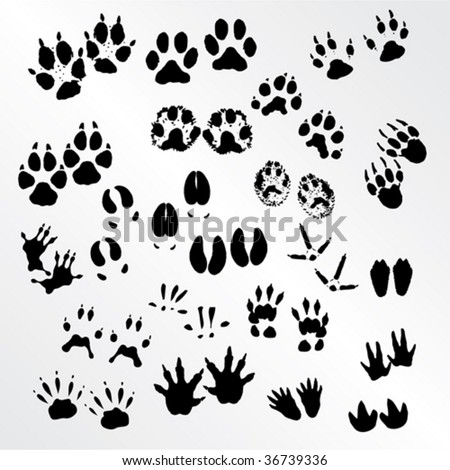 Vector collection of animal and bird trails - stock vector