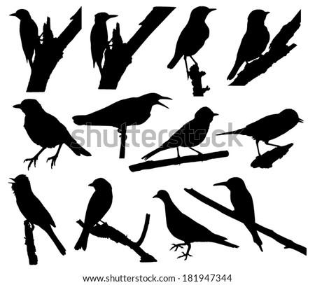 Vector collection of bird silhouettes  - stock vector
