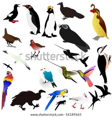Vector collection of birds - stock vector