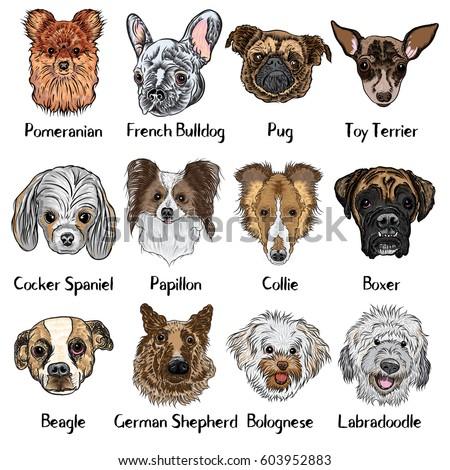 Herding Dogs Stock Vectors Images Amp Vector Art Shutterstock
