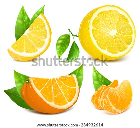 Vector collection of fresh ripe citrus fruits: lemons and oranges with leaves. - stock vector