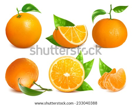Vector collection of fresh ripe oranges and tangerines with leaves.  - stock vector