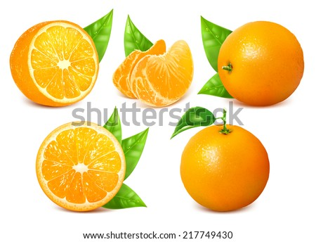 Vector collection of fresh ripe oranges with leaves.