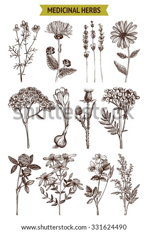 Vector collection of hand drawn spices and herbs. Botanical plant illustration. Vintage medicinal herbs sketch set.  - stock vector