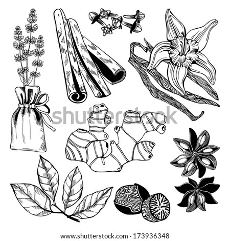 Vector collection of hand drawn spices and herbs. Vintage hand drawn illustration of spices isolated on white - stock vector