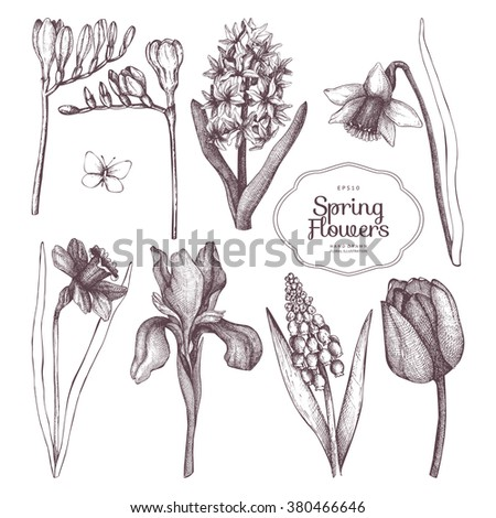 Vector Collection Of Hand Drawn Spring Flowers Sketch Isolated On White Decorative Set With Vintage