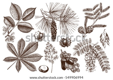 Vector collection of hand drawn trees illustration. Vintage set of leaves, fruits, seeds, nuts, flowers sketch. Botanical garden elements.