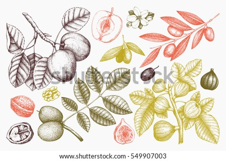 Vector collection of hand drawn trees illustration. Vintage set of leaves, fruits, seeds, nuts, flowers sketch on chalkboard. Botanical garden drawing.