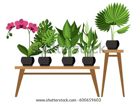 Vector Collection Of Indoor, House Plants In Pots. Home Decorative And  Deciduous Plants In