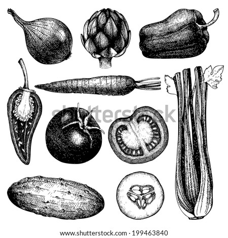 Vector collection of  ink hand drawn vegetables. Vintage healthy food illustration isolated on white - stock vector