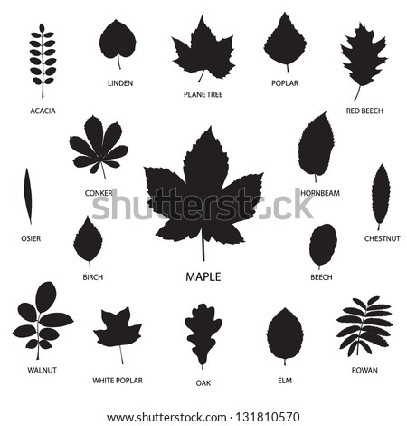 Vector collection of leaf silhouettes isolated on white background - stock vector