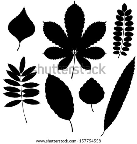 Vector Collection of Leaf Silhouettes isolated on white background.  Acacia, chestnut, willow, mountain ash (rowan tree, service-tree), aspen (asp), beech and poplar leaves. - stock vector