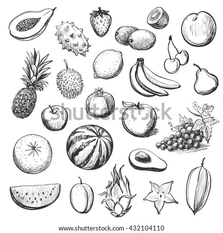 Vector collection of sketches of exotic fruits on white background - stock vector