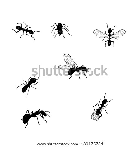 Vector collection of various positioned doodle ants isolated - stock vector