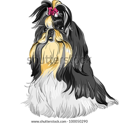 vector color sketch of the dog Shih Tzu (dog-lion; dog-chrysanthemum) Chinese breed - stock vector