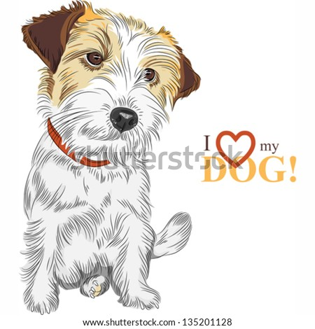 Vector color sketch of the wire-haired dog Jack Russell Terrier breed - stock vector