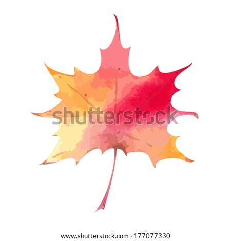 Vector colorful autumn maple leaf isolated on white background. Autumn symbol. Vector illustration. - stock vector