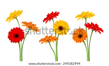 Vector colorful gerbera flowers with stems isolated on a white background. - stock vector