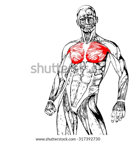 vector concept conceptual 3d chest human stock vector 319015349, Muscles