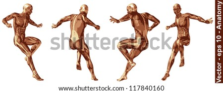 Vector concept or conceptual human or man 3D anatomy body with muscle isolated on white background a metaphor to medicine,sport,male,muscular,medical,health,biology or fitness group,collection or set - stock vector
