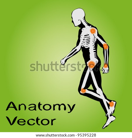 Vector concept or conceptual white and black man anatomy illustration on green background for medical,medicine,health,rheumatism,osteoporosis,muscle,ache,arthritis,inflammation,painful or bones design - stock vector