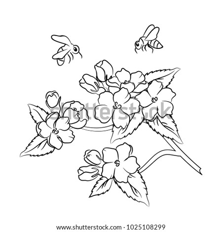 Vector Contour Apple Flower Tree And Bee On White Coloring Book