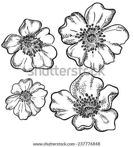vector contour flowers illustration. - stock vector