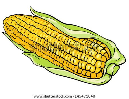vector corn on the cob - stock vector