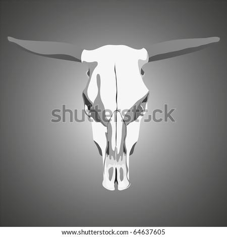 Bovine skull anatomy