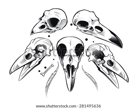 Vulture Line Drawing Vector Crow Skull Stoc...