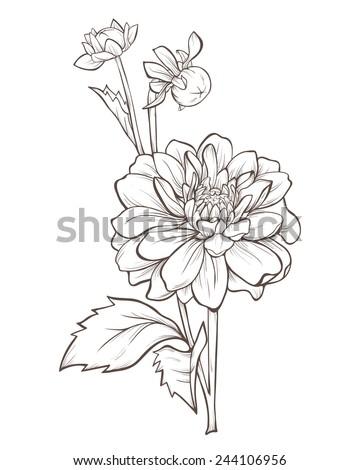 Vector Dahlia Flower Isolated On White Stock Vector
