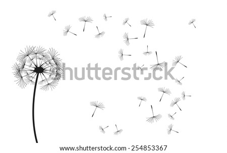 Vector dandelion, black eps illustration on white background.