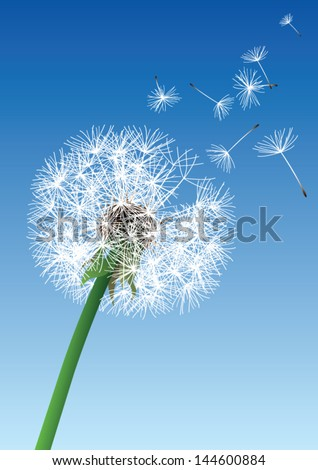 vector dandelion on blue background