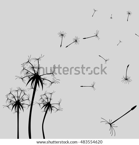 Vector Dandelion silhouette. Flying buds black on white