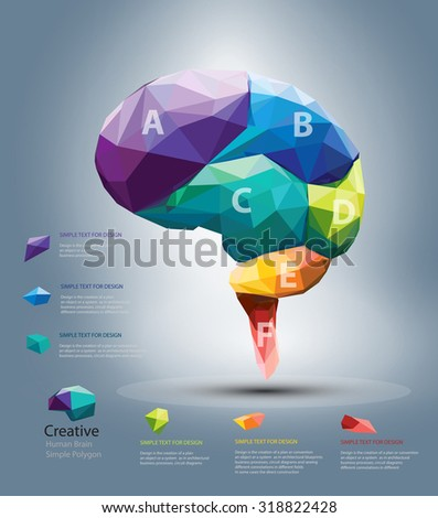 Vector Design - Eps10 Design Vector Brain Polygon, Vector Design Part of Brain, Brain Infographic concept, Infographic of Thinking and Process concept - stock vector
