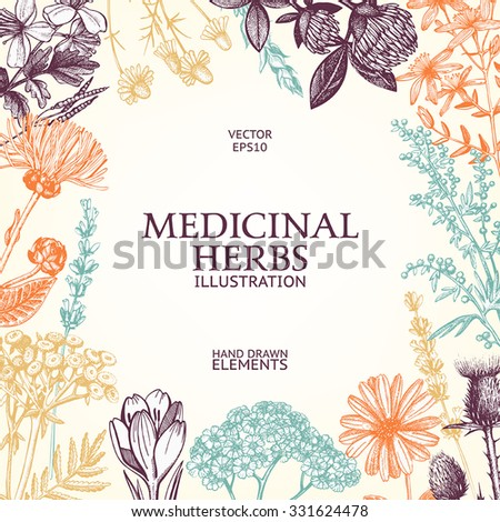 Vector design with hand drawn spices and herbs. Decorative colorful background with vintage medicinal herbs sketch. - stock vector