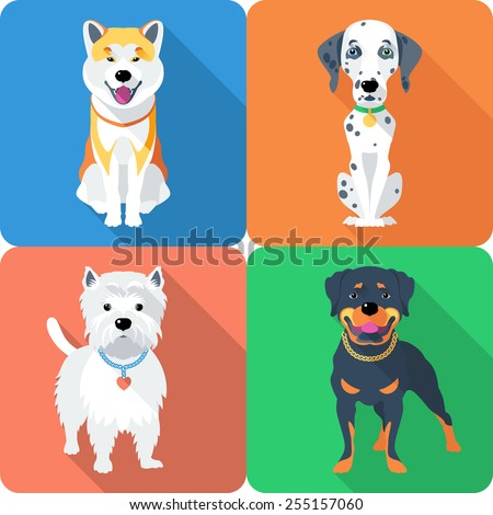 Vector dog Akita Inu,  Dalmatian, Rottweiler and West Highland White Terrier breed face icon flat design  - stock vector