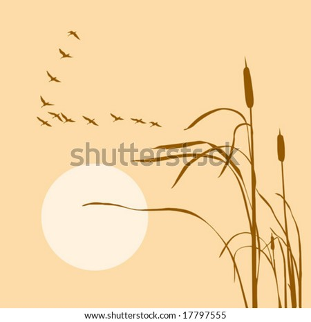 vector drawing flock geese on bulrush