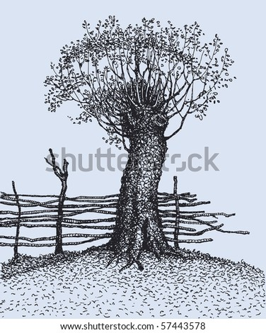 Vector drawing. In the old tree near the fence have grown new branches - stock vector