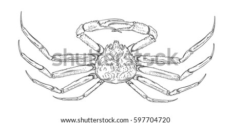 Vector Drawing King Crab Line Art Stock Vector 597704720 Drawing King