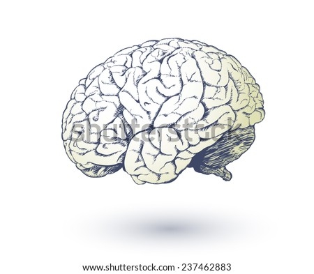 Vector drawing of human brain for medical design.