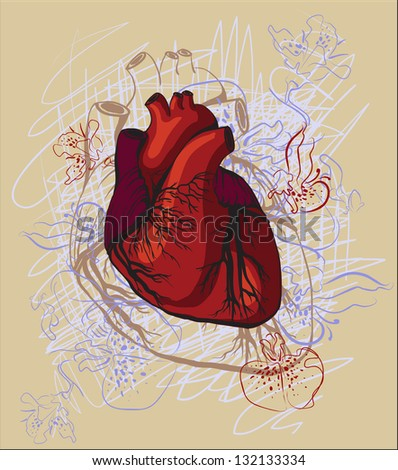 vector drawing of the heart, anatomical - stock vector